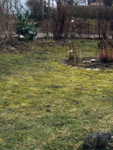 Rasen entfernen - Wenn der Rasen weg muss
