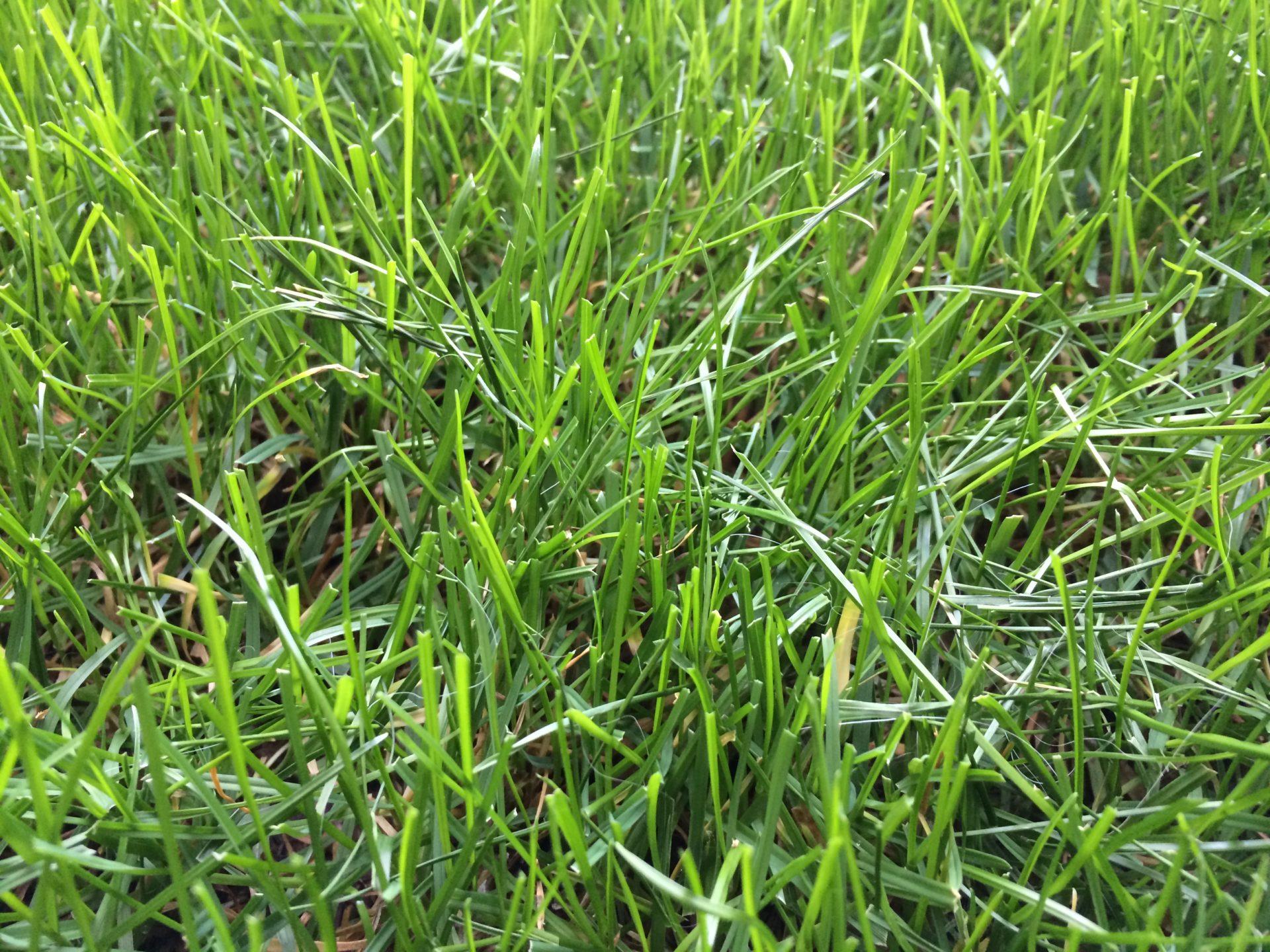 Rasen mulchen für ein gutes Ergebnis