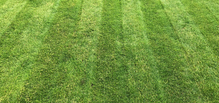 Tolle Streifen auf dem Rasen nach dem Lüften