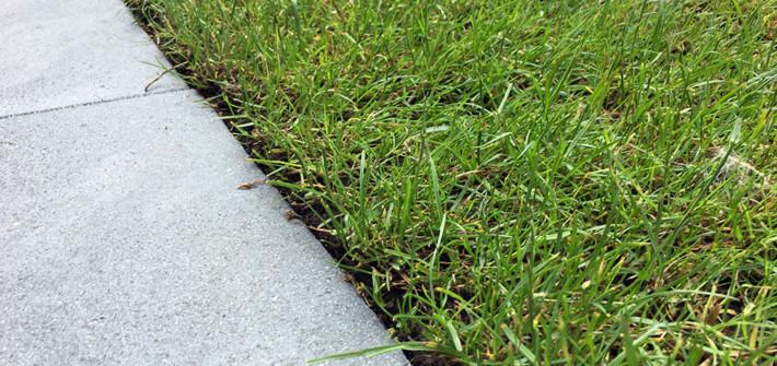 Eine saubere Rasenkante