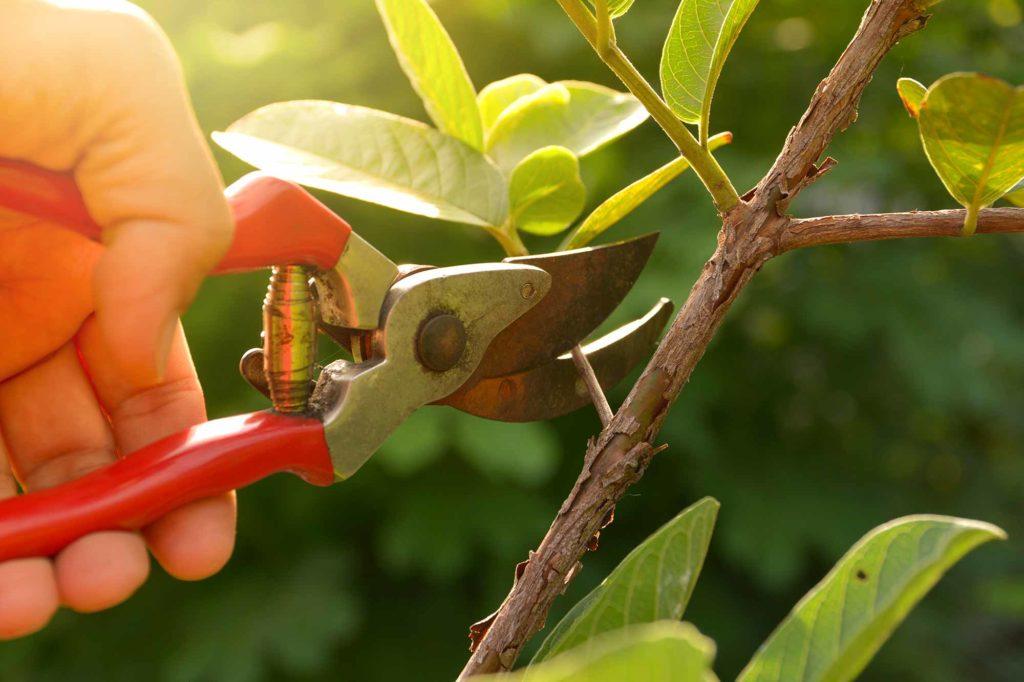 Gartenschere - Werkzeug für Gärtner