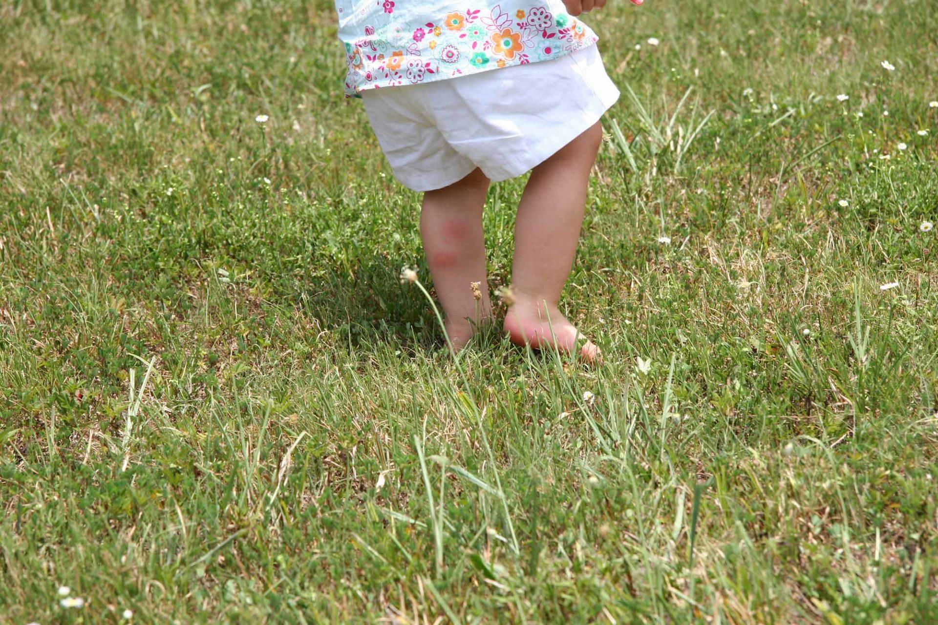 Grasmilben Bekampfen 6 Fragen Zu Den Kleinen Lastigen Plagegeistern