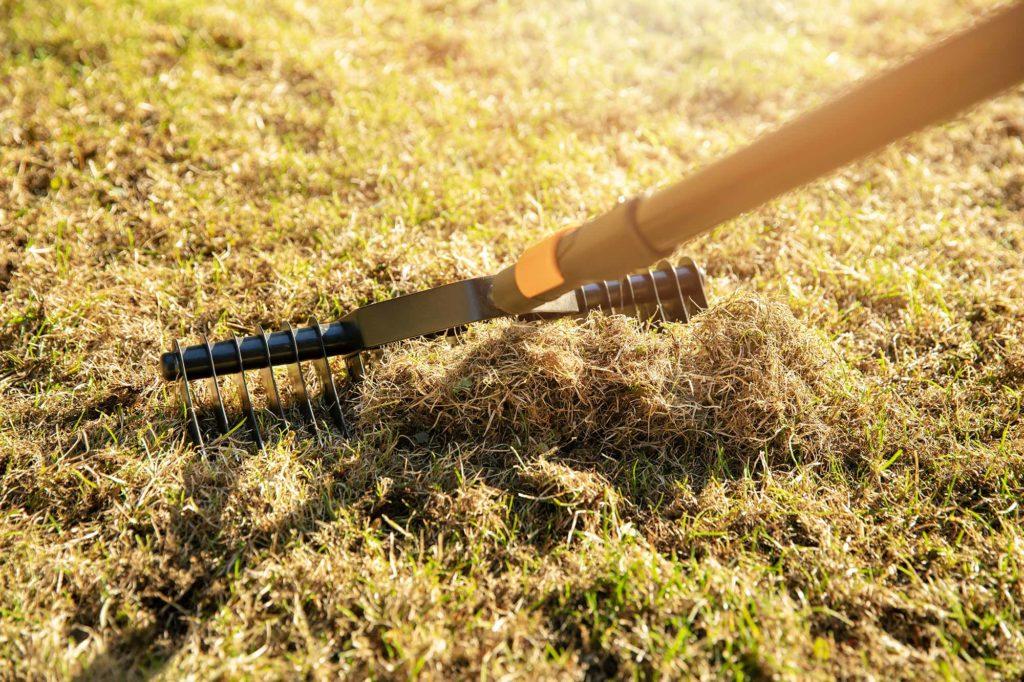 Moos im Rasen bekämpfen