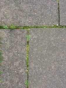 Rasen in den Fugen entfernen: Wir zeigen wie