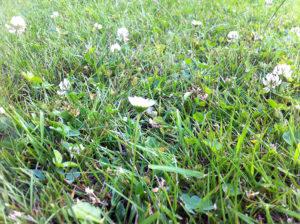Regelmäßiges Rasenmähen sorgt für ein gleichmäßigen und gesunden Rasen