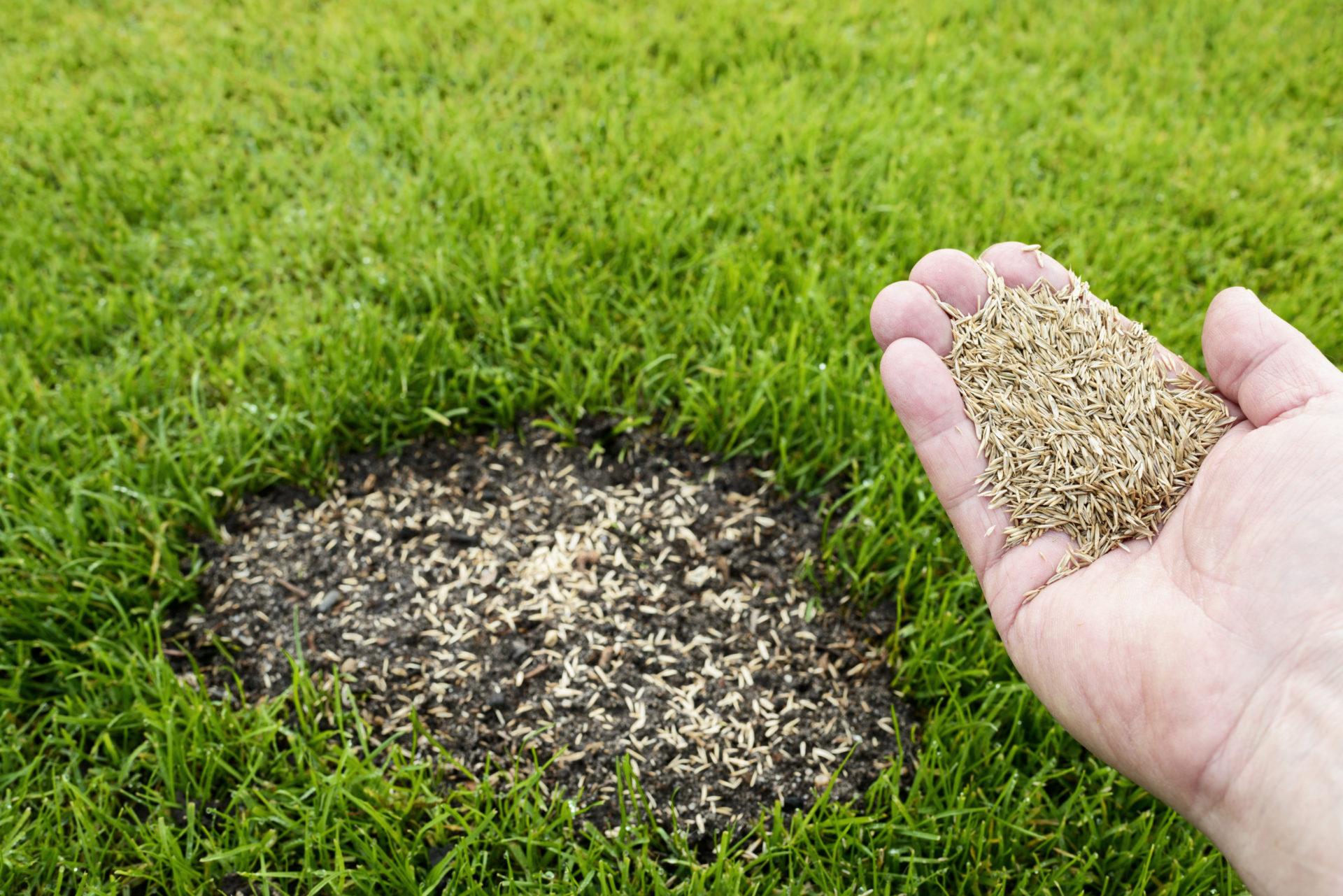 Compo Rasen Saat Pad - Schnelle Alternative zum Nachsäen?