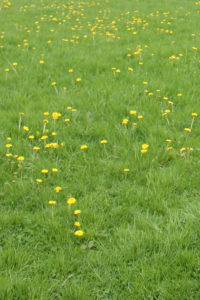 Rasen sprengen - Morgens oder abends