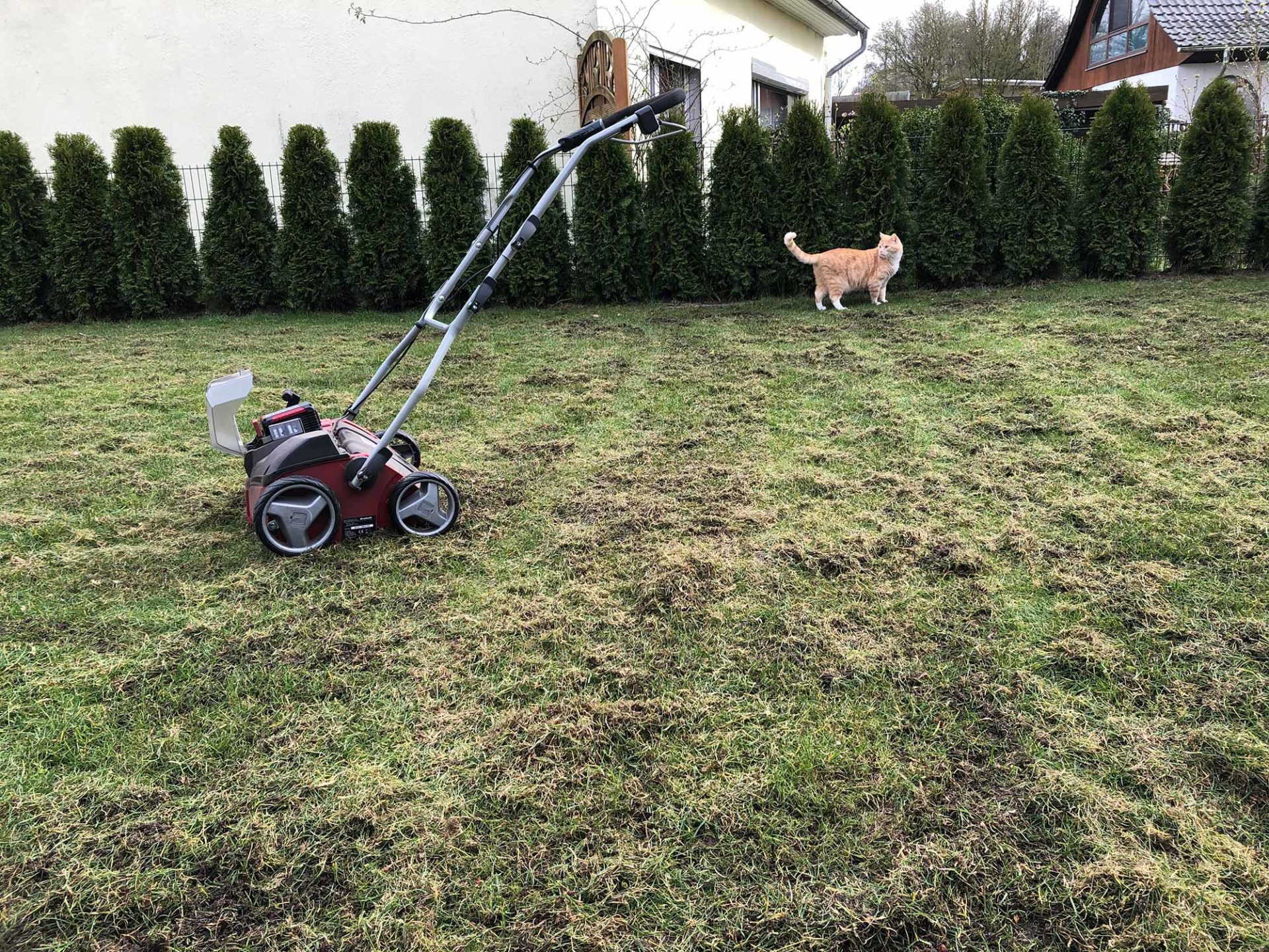 Rasen vertikutieren - Start in der Rasenpflege