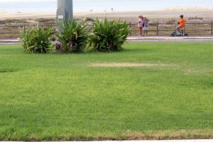 Der Rasen wird gelb - Was kann man tun?