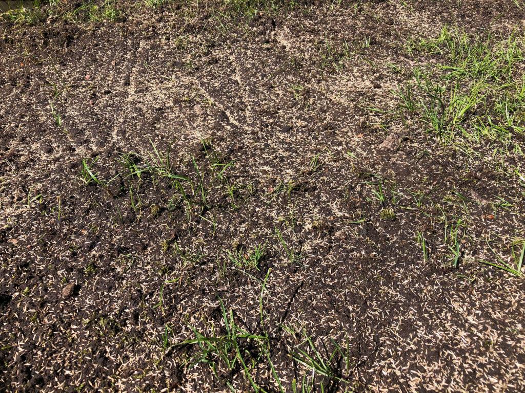 Schattenrasen auf dem Boden ausgebracht