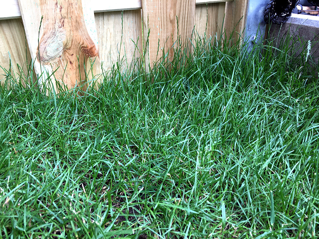 Die Rasenkante ist ein schwieriger Bereich: Mit einer Handrasenschere gut zu meistern