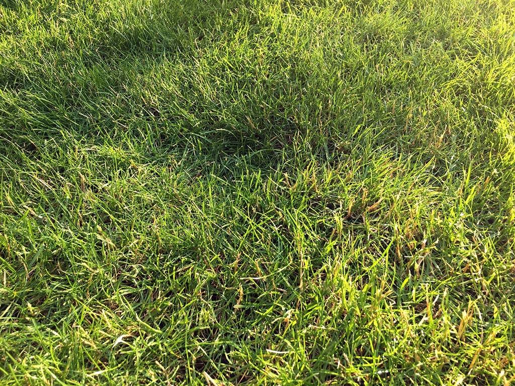 Die richtige Rasenpflege für ein tolles Grün