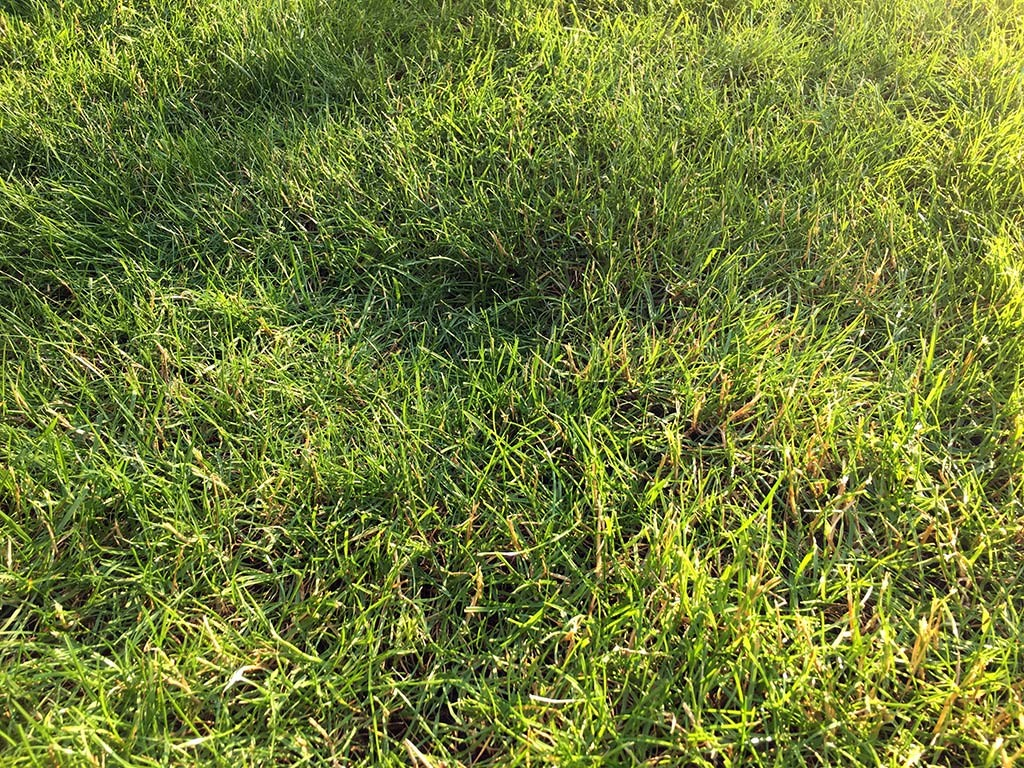 rasen pflege lawn care set v 1 0 fs2015 farming simulator 2015 2017 wiedemann rasen pflege. Black Bedroom Furniture Sets. Home Design Ideas