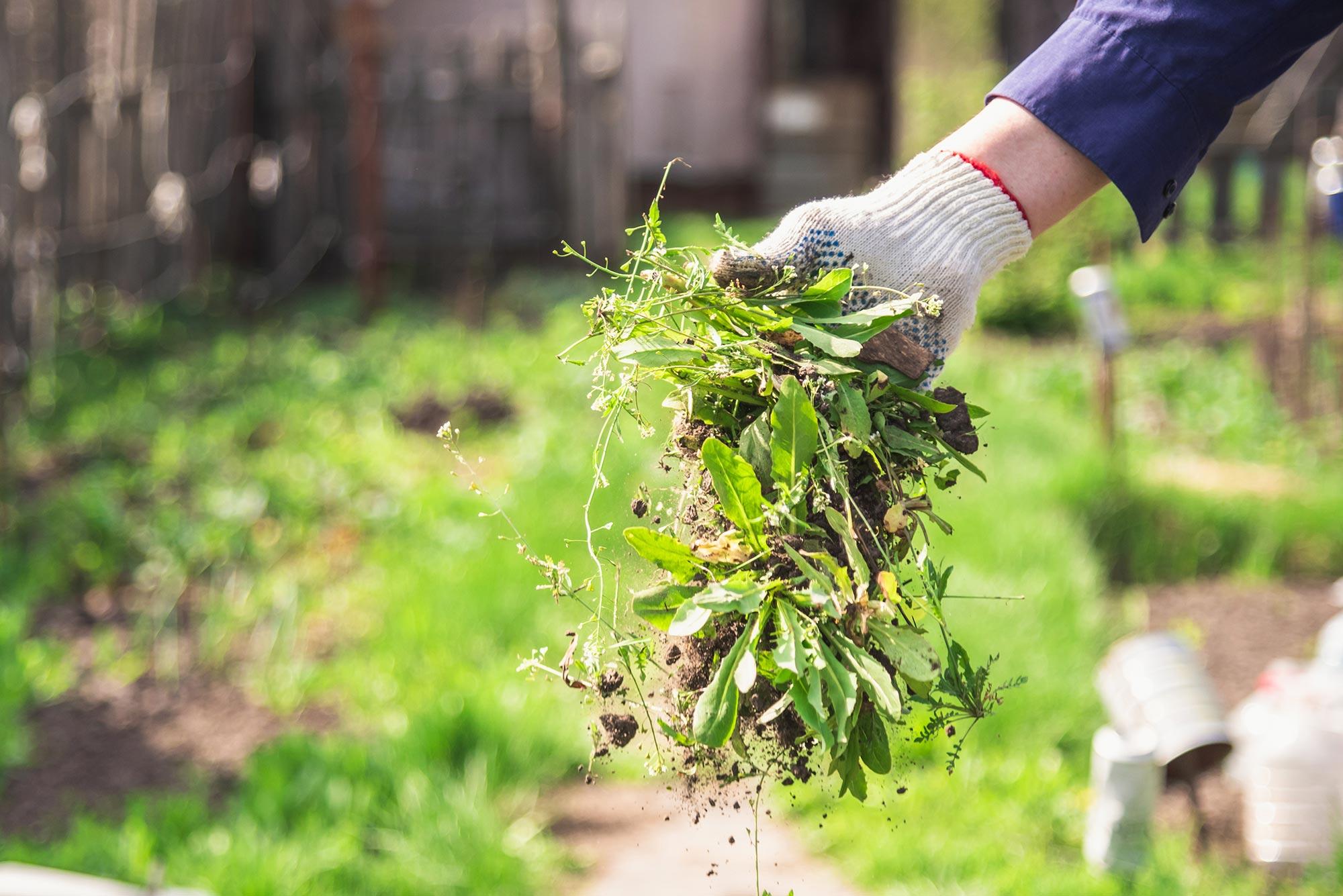 Totalherbizide - Unkraut im Garten mit Chemie entfernen