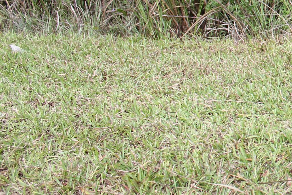Verbrannter Rasen - Wie wird er wieder grün